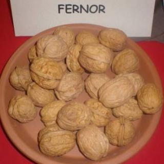 Фернор