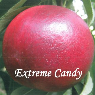 EXTREME CANDY