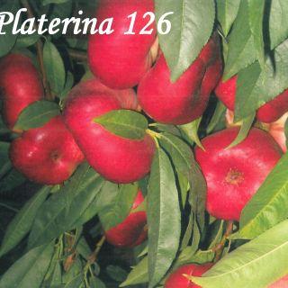 PLATERINA 126