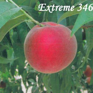 EXTREME 346