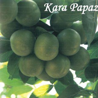Kara Papaz
