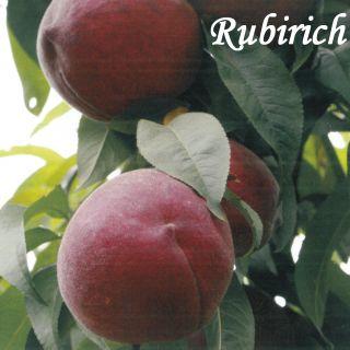 RUBIRICH