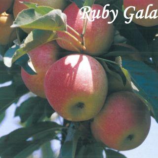 Ruby Gala