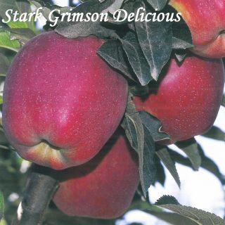 STARK GRIMSON DELICIOUS