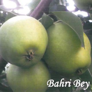 BAHRI BEY