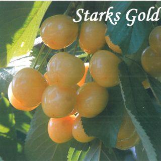 Starks Gold