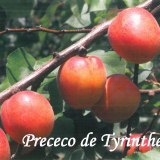 PRECECO DE TYRINTHE
