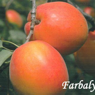 Фарбали
