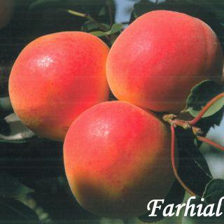 Farhial