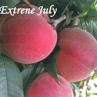 Extreme July