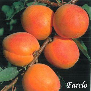 Farclo
