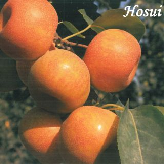 HASUI