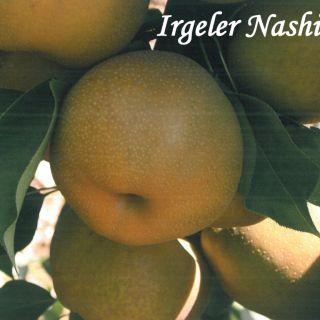 IRGELER NASHI