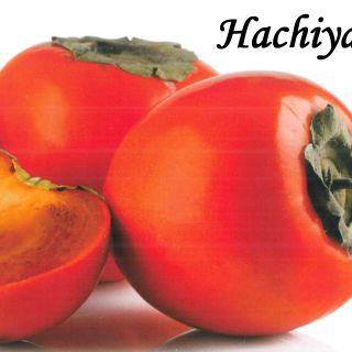 ХАЧИА (Hachiya)