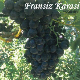 FRANSIZ KARASI
