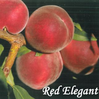 RED ELEGANT