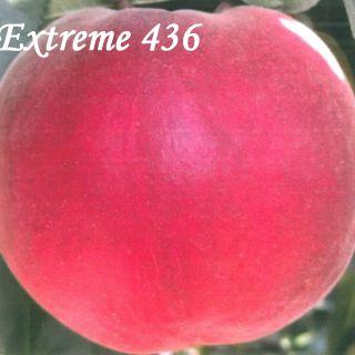 EXTREME 436