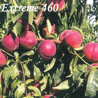 EXTREME 460