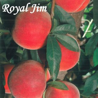 ROYAL JIM