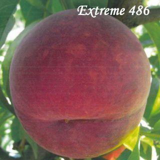 EXTREME 486