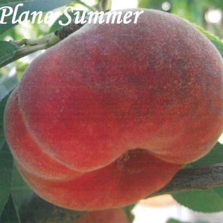 PLANE SUMMER