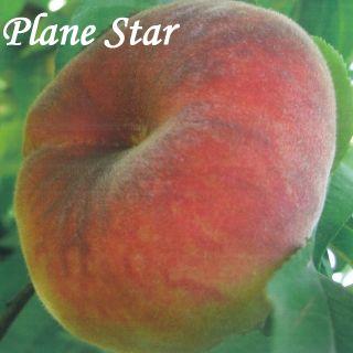PLANE STAR