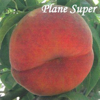 PLANE SUPER