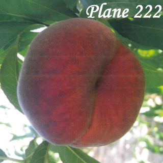 PLANE 222