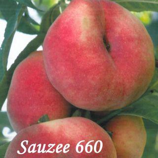 SAUZEE 660