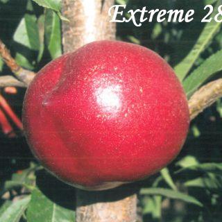 Extreme 28