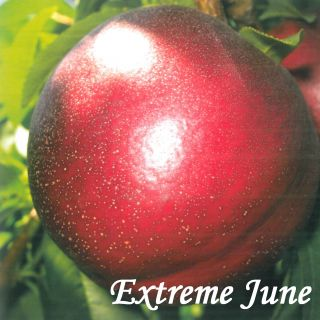 EXTREME JUNE