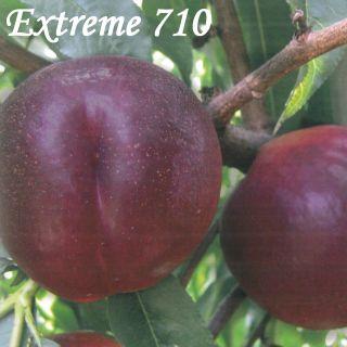 EXTREME 710