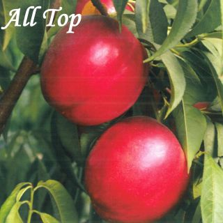 ALL Top