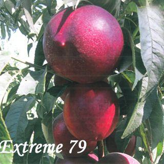EXTREME 79