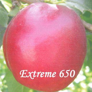 EXTREME 650